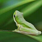 Little Green Frog by Liz Worth