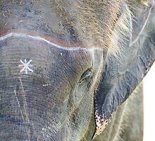 Elephant 1 by HelenPadarin