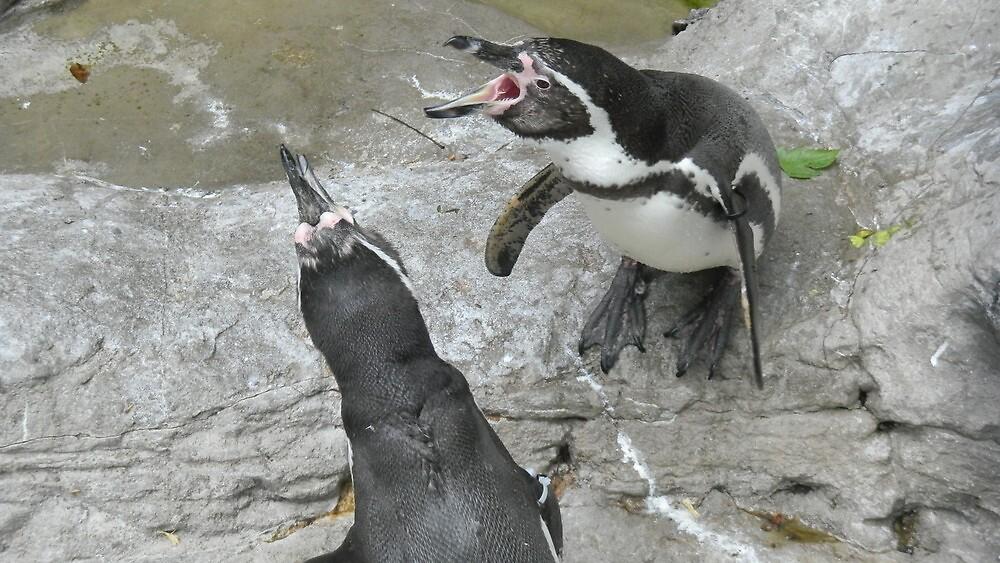 Penguins in Disagreement by figuresk8rgirl