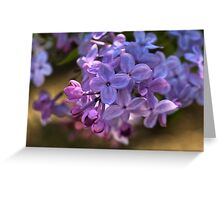 Lilac in bloom  Greeting Card