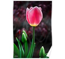 Tulip And Buds Poster