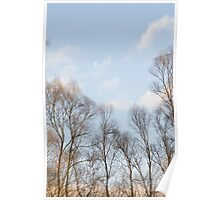 Winter Sky with Bare Trees Poster