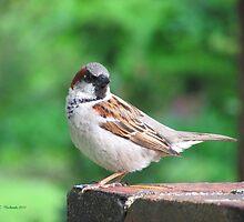 Williamsburg House Sparrow by Jennie L. Richards