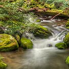 River's  Careless Whisper by JHRphotoART