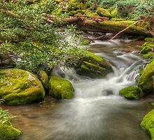 River's  Careless Whisper by JHRphotoART