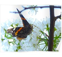 The Navy lost this Red Admiral who went AWOL Poster