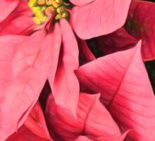 Pink Poinsettias Painting - Christmas Impressions Sticker