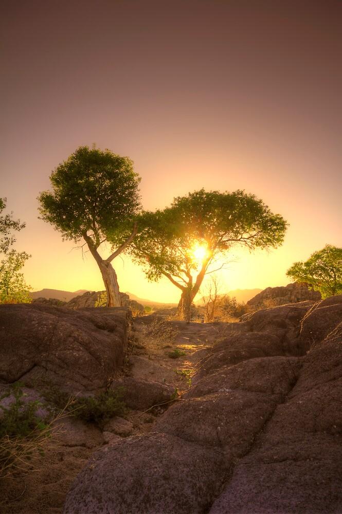 Shading Sunset by Bob Larson