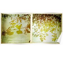 Cambridge Collection: Spring Leaves Poster