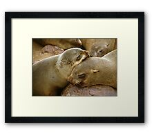 'Cuddling Cousins' - Cape Fur Seals  Framed Print