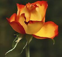 Rose Alight by David Alexander Elder