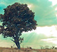 tree by iamYUAN