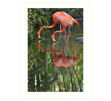 Flamingoes, As Is Art Print
