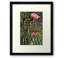 Flamingoes, As Is Framed Print