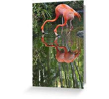 Flamingoes, As Is Greeting Card