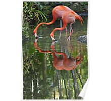 Flamingoes, As Is Poster
