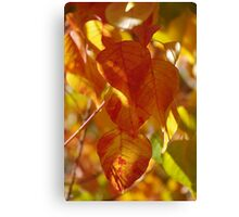 Autumn colours to cheer us Canvas Print