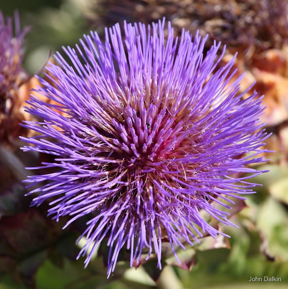Purple Flower Power by John Dalkin