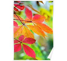 Colorful Leaf Art Poster