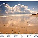 Wellfleet, Cape Cod Poster by Artist Dapixara