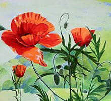 Poppies by Tamara Shturba