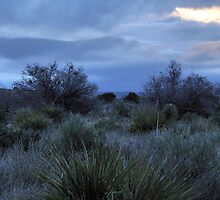 Desert Dawn - Guadalupe Mountains by Stephen Vecchiotti