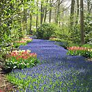 The Flower Lane, 2012, Keukenhof Gardens, Holland by BlueMoonRose