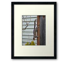 Fence Climber Framed Print