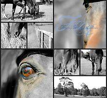 Horses by Nadja  Farghaly