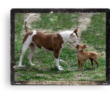 Pitbull meets Chihuahua  Canvas Print
