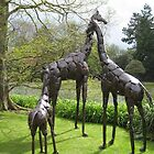 Giraffes in a Yorkshire Garden? Whatever next. by Sue Gurney