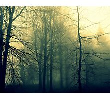 woodland dreaming Photographic Print
