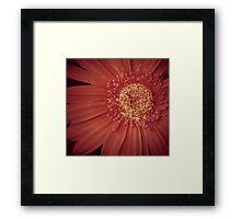 Get Well Flower Framed Print