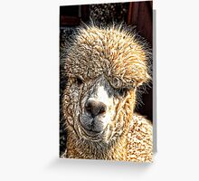 Alpaca At Abbotsbury, Dorset Greeting Card