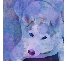 Water Color Husky Photographic Print