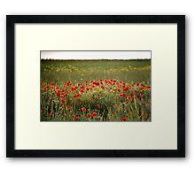 Field Of Hazy Poppies Framed Print