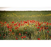 Field Of Hazy Poppies Photographic Print