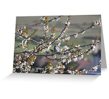 WOOD PIGEON IN BLOSSOM 2 Greeting Card