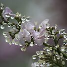 After The Rain by reindeer
