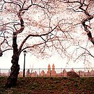 Cherry Blossoms - Central Park Reservoir - New York City by Vivienne Gucwa