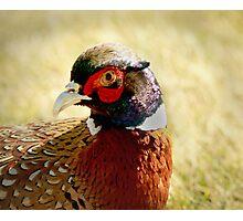 Pheasant Running Free Photographic Print