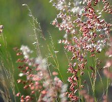 Wild Grass by TheaShutterbug