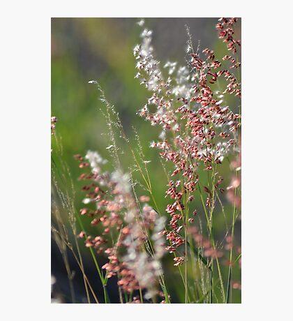Wild Grass Photographic Print