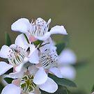 Tiny White Flowers by TheaShutterbug