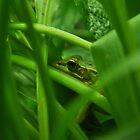 Green Frog by Bjana Hoey