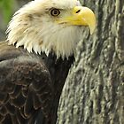 Eagle by Bjana Hoey