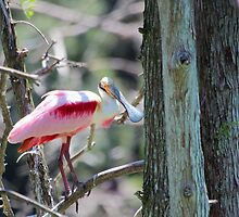 I'm Pretty in Pink! by freevette