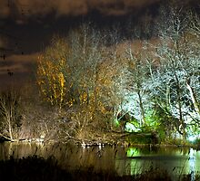 Illuminated trees at St James Park London by night by Magdalena Warmuz-Dent