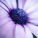 Purple Daisy by TyTheTerrible
