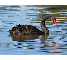 Black Swan Photographic Print
